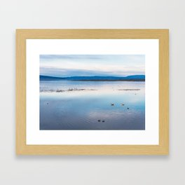 Flamingoes on El Calafate, Patagonia, Argentina Framed Art Print