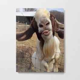Goat Smiles Metal Print