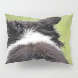 Rudy ~ Border Collie Pillow Sham