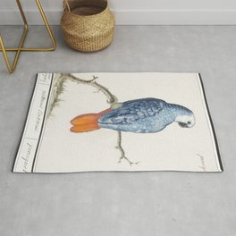 Gray red-tailed parrot psittacus erithacus (1596-1610) by Anselmus Botius de Boodt Rug