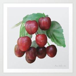 Sour Cherry, watercollor Art Print