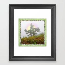 TSUGA MERTENSIANA IN AN AUTUMN CLOUD Framed Art Print