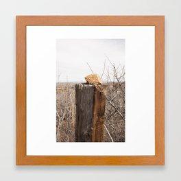 Mountain Mahogany Seed Framed Art Print