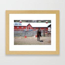 Rebel Horse Framed Art Print