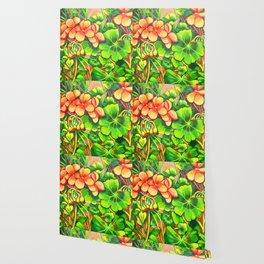 Geraniums Wallpaper