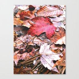 Brisk Autumn  Canvas Print