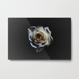 WHITE - ROSE - NATURE Metal Print
