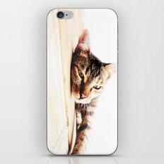 Cats Love iPhone & iPod Skin
