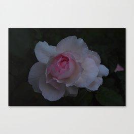 Pink Soul  Canvas Print
