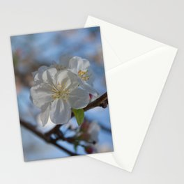 White Crabapple blossoms Stationery Cards