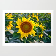 Sunflower Fields Forever - No. 1 Art Print