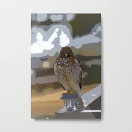Chicken Hawk Starring Down At Me Metal Print