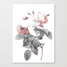 Rose 2 Canvas Print