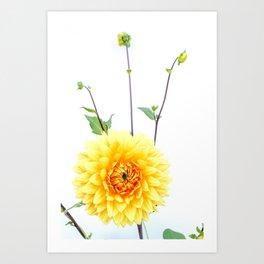 Bursting sunlight dahlia Art Print