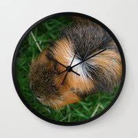 guinea pig Wall Clocks featuring American Crested Guinea Pig by Emily Hunter-Higgins