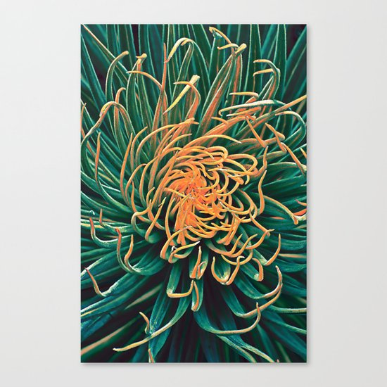 Green & orange succulent Canvas Print