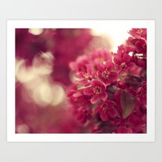 Fuschia Flowering Tree Art Print
