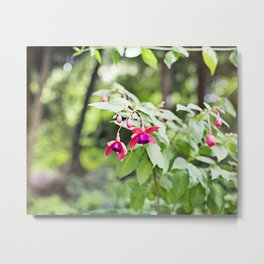 Fuchsia Dell Golden Gate Park Metal Print