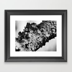 fungus 2015  Framed Art Print