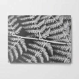Fern Lines Metal Print