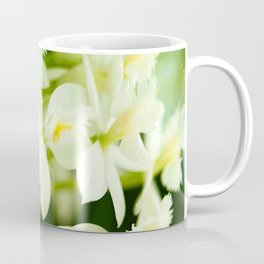 White Epidendrum Orchids Coffee Mug