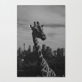 Concrete Jungle Canvas Print