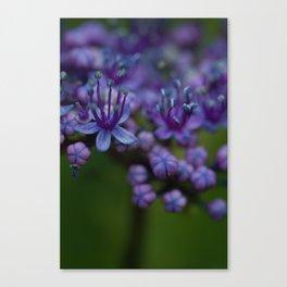 Pretty Purple Flower After the Rain Canvas Print