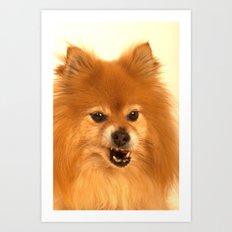 Angry Pomeranian dog Art Print