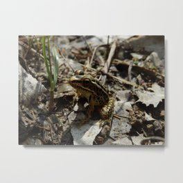 Pickerel Frog Metal Print