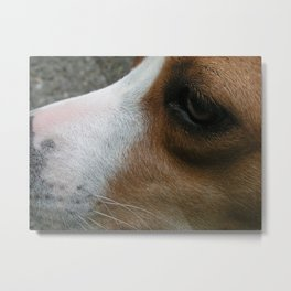 Louise A Boxer Mix Metal Print