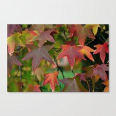 Maple Shapes Canvas Print