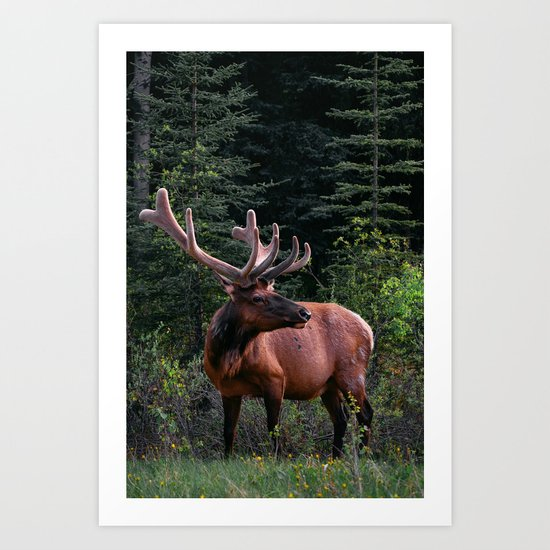 Elk in Canada by sparro42