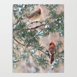 Winter Pair Cardinals (sq) Poster