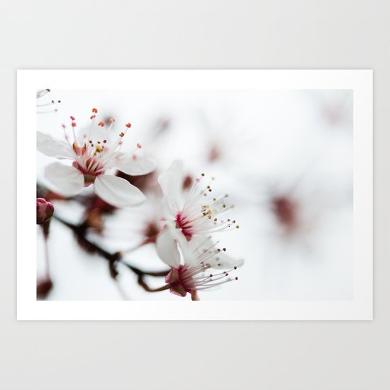 Plum Tree Art Print