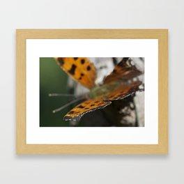 Crisp Wing Framed Art Print