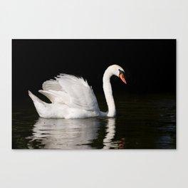Mute Swan Cygnus olor at lake Canvas Print