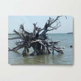 Left Over Tree Metal Print