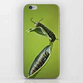 Monarch Caterpillars iPhone Skin