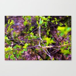 """Terminus"" 