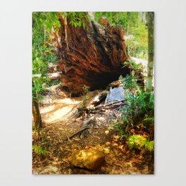 To wonderland Canvas Print
