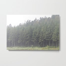 Pine trees Perfectly lined up in the mist. Metal Print
