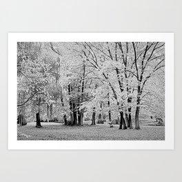 Malmsbury Botanic Gardens No. 2 Art Print
