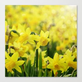 Bright Yellow Narcissus Canvas Print