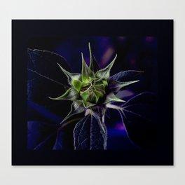 Pot Botany at the Laurels 3 Canvas Print