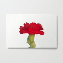 red carnation in bloom in spring Metal Print