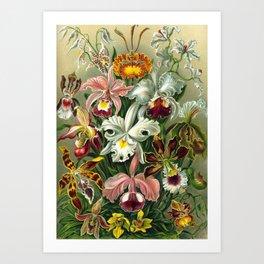 Victorian Orchids Floral Print-Ernst Haeckel Art Print