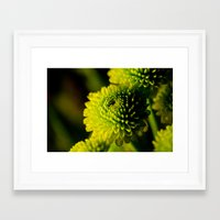 lime Framed Art Prints featuring Lime by Nicole Stamsek
