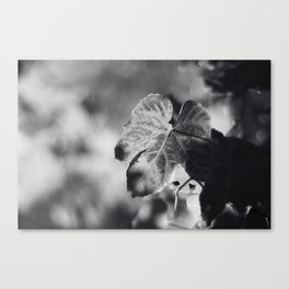 Autumn Grape Leaf in Black and White Canvas Print