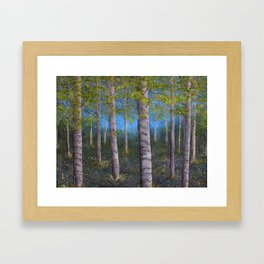 Spring Birch Grove Framed Art Print