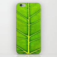 leaf iPhone & iPod Skins featuring Leaf by Patterns and Textures